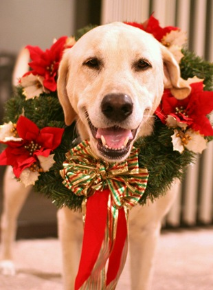 Собака в новогоднем венке