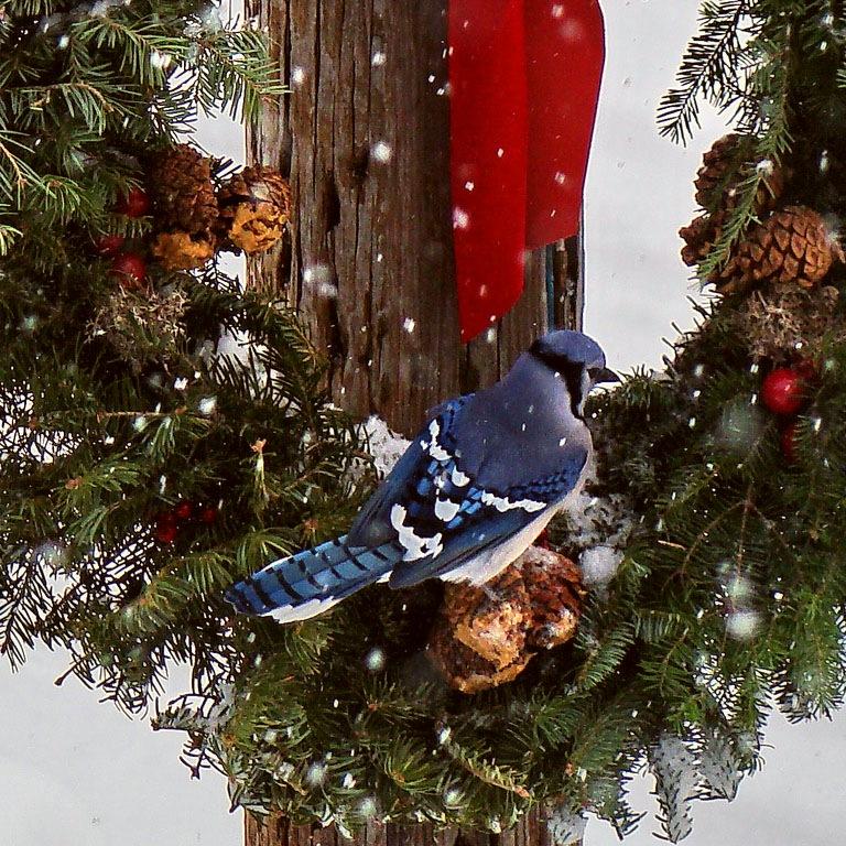 Новогодние венки своими руками из веток деревьев